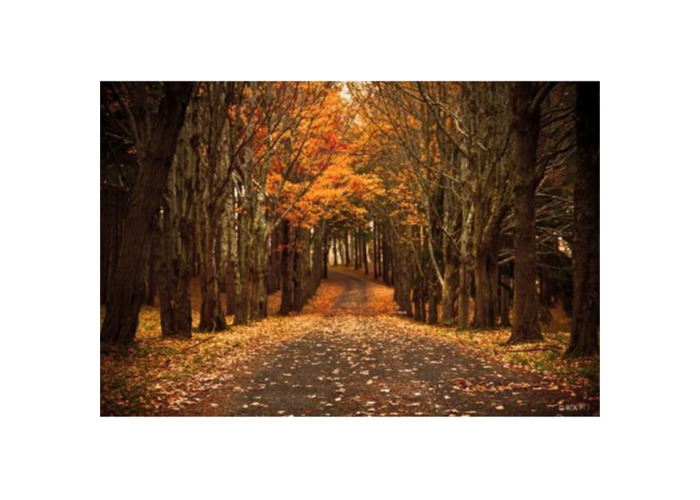 7x5ft Autumn Forest Background Photography Backdrop Studio Photo Vinyl Cloth - 2
