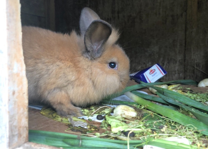 Bunnies for Rent!!! - 2