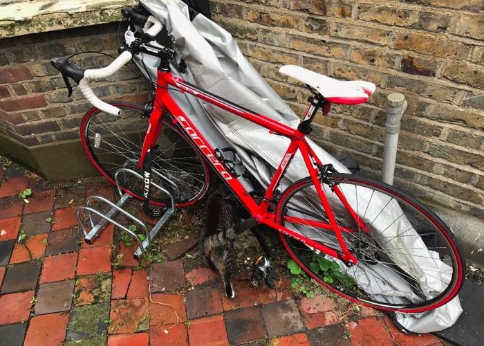 carrera zelos-road-bike-red-73837883.JPG