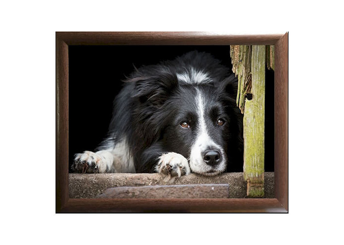 COUNTRY MATTER COLLIE CHILLOUT LAPTRAY - 1