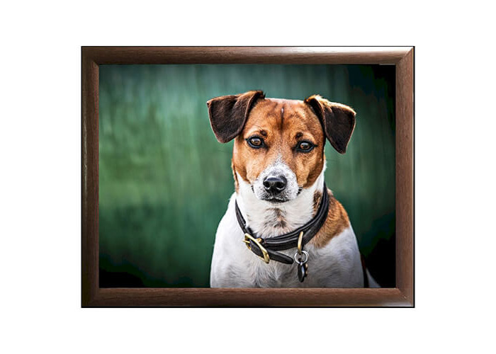 COUNTRY MATTERS AMBER JACK RUSSELL LAPTRAY - 1