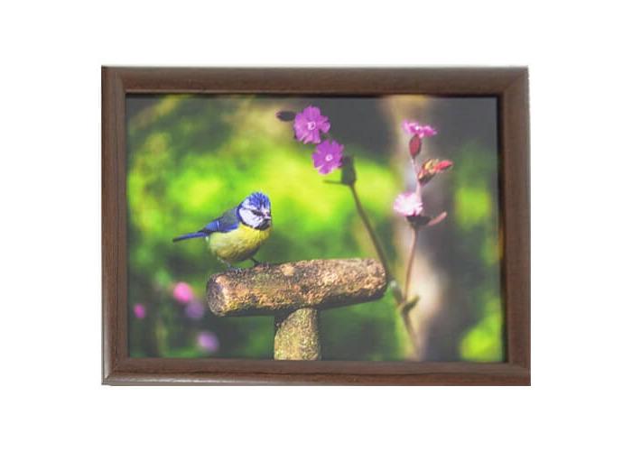 Country Matters Laptray Garden Blue Tit Design Cushion Ed Back 42 cm x 32.5 cm New, Cotton/Polystyrene/Ply Board, Multi-Colour, 43 x 32.5 x 6.5 cm - 1