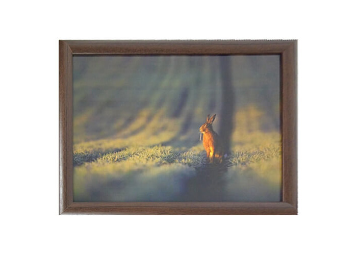 COUNTRY MATTERS Laptray Hare Design Cushion ed Back 42 cm x 32.5 cm New, Cotton/Polystyrene/Ply Board, Multi-Colour, 43 x 32.5 x 6.5 cm - 1