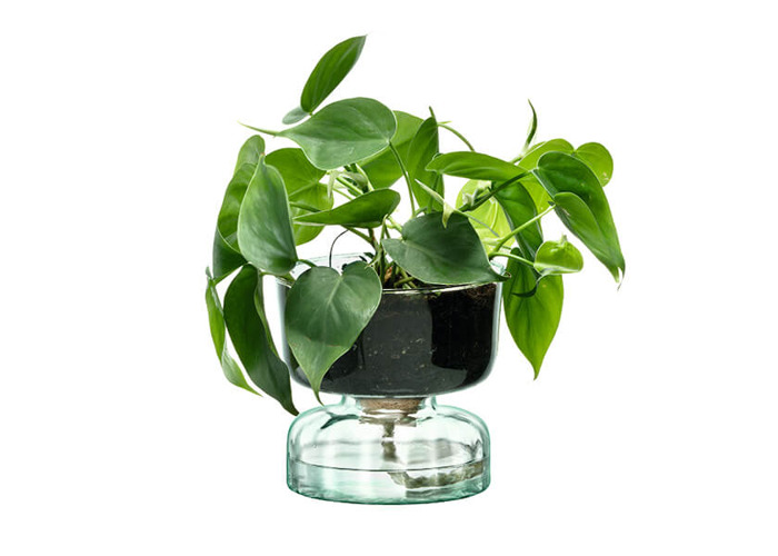 LSA Canopy 13cm Self Watering Planter - 2