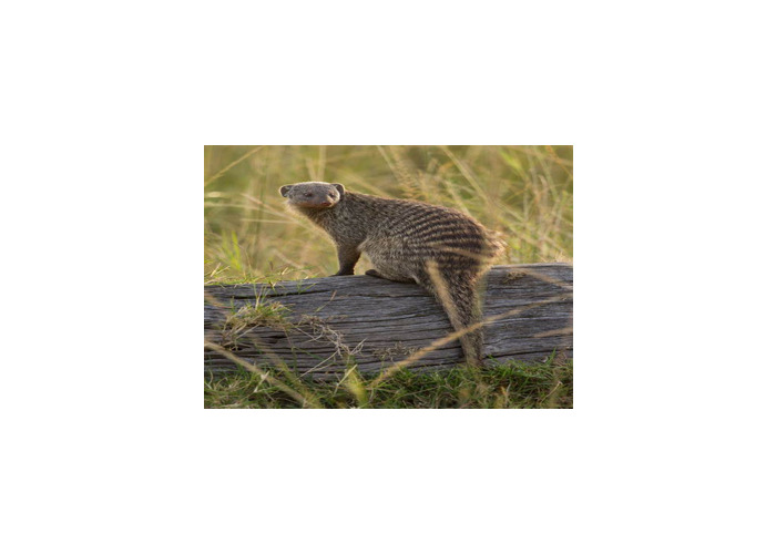 Mongoose - 1
