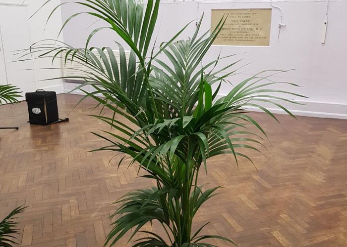 Plantas de palmera para decoraciones - 1